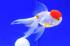 Uploaded image _DSC6226.jpg