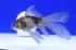 Uploaded image _DSC6267.jpg