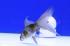 Uploaded image _DSC6269.jpg