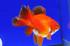 Uploaded image _DSC6456.jpg