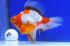 Uploaded image _DSC6757.jpg