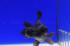 Uploaded image _DSC6978.jpg