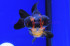 Uploaded image _DSC7102.jpg