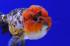Uploaded image _DSC7145.jpg