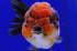 Uploaded image _DSC7149.jpg