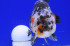 Uploaded image _DSC7224.jpg
