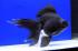 Uploaded image _DSC7326.jpg