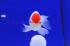Uploaded image _DSC7436.jpg