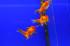 Uploaded image _DSC7470.jpg