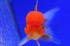 Uploaded image _DSC7536.jpg
