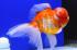 Uploaded image _DSC7695.jpg