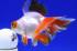 Uploaded image _DSC7842.jpg