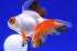 Uploaded image _DSC7844.jpg