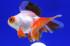 Uploaded image _DSC7845.jpg