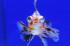Uploaded image _DSC7904.jpg