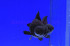 Uploaded image _DSC8040.jpg