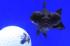 Uploaded image _DSC8046.jpg