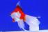 Uploaded image _DSC8157.jpg