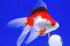 Uploaded image _DSC8164.jpg