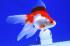Uploaded image _DSC8166.jpg