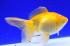 Uploaded image _DSC0177.jpg