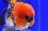 Uploaded image _DSC0201.jpg