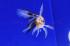 Uploaded image _DSC8580.jpg