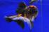 Uploaded image _DSC8983.jpg