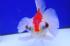 Uploaded image _DSC9138.jpg