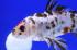 Uploaded image _DSC9166.jpg