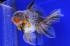 Uploaded image _DSC9189.jpg