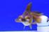 Uploaded image _DSC9525.jpg
