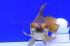Uploaded image _DSC9526.jpg