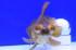 Uploaded image _DSC9527.jpg
