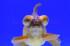 Uploaded image _DSC9528.jpg
