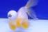 Uploaded image _DSC9567.jpg