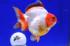 Uploaded image _DSC9654.jpg