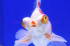 Uploaded image _DSC9863.jpg