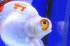 Uploaded image _DSC9937.jpg