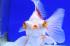 Uploaded image _DSC9943.jpg