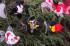 Uploaded image DSC_1680.jpg