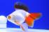 Uploaded image _DSC0060.jpg