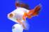 Uploaded image _DSC0066.jpg