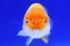 Uploaded image _DSC0266.jpg