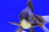 Uploaded image _DSC0469.jpg