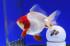 Uploaded image _DSC0545.jpg