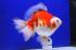 Uploaded image _DSC0664.jpg