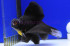 Uploaded image _DSC0771.jpg