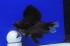 Uploaded image _DSC0780.jpg