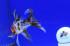 Uploaded image _DSC0891.jpg